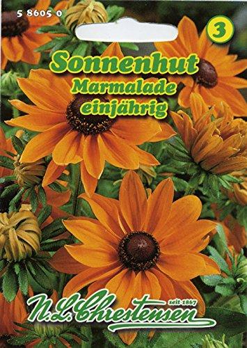 Sonnenhut Marmalade goldorange Sommerblume 'Rudbeckia hirta'