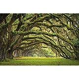 Viale verde delle querce in estate fotomurale decorazione da parete by Great Art 140 cm x 100 cm
