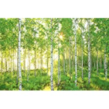 "Empapelado para mural ""Bosque de betulas primaverales de domingo"" National Geographic, Komar, 8-519 de 368cm x 254cm – verde (paquete de 8)"