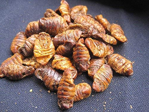 Soie chenilles --moulu --1kg soie Chenille farine