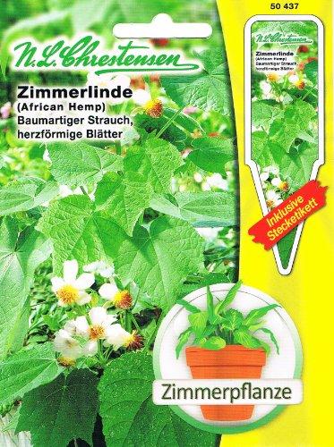 Zimmerlinde Zimmer Linde Sparmannia africana Zimmerpflanze