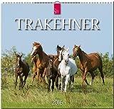 Trakehner 2016: Original Stürtz-Kalender - Mittelformat-Kalender 33 x 31 cm [Spiralbindung]