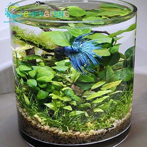 aquarium semences achat vente de aquarium pas cher. Black Bedroom Furniture Sets. Home Design Ideas