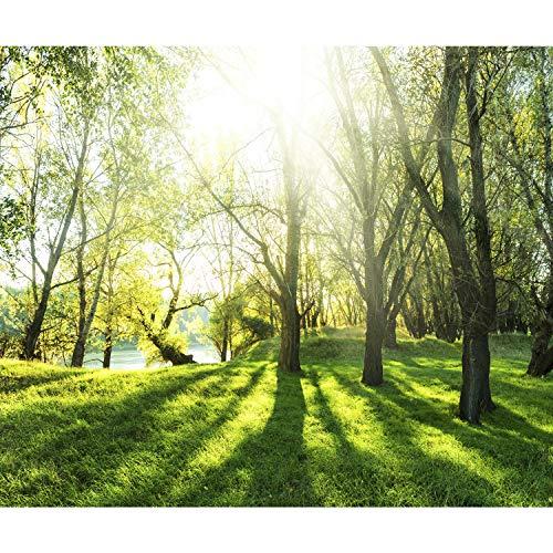 decomonkey Fototapete selbstklebend Wald 343x256 cm XL Selbstklebende Tapeten Wand Fototapeten Tapete Wandtapete klebend Klebefolie Natur Landschaft Baum -