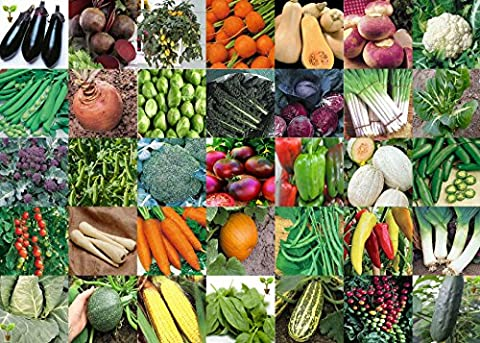 Viridis Hortus - 35 Packs of Vegetable Seeds - TOMATO,