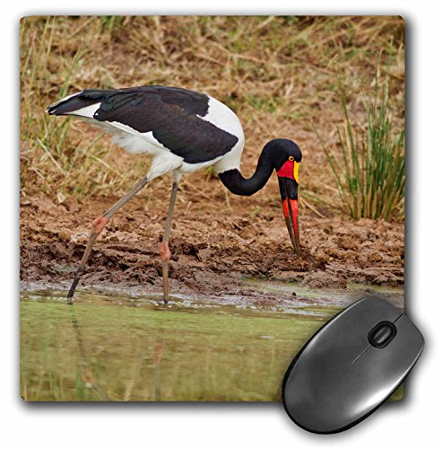 Danita Delimont - Jagdeep Rajput - Birds - Saddle-billed Stork, Maasai Mara wildlife Reserve, Kenya. - MousePad (mp_188269_1) (Stork Saddle-billed)