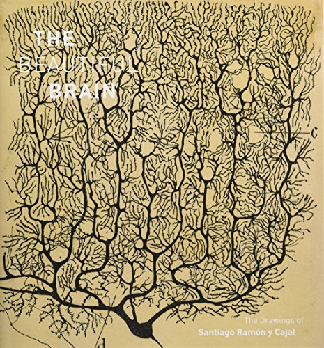 The Beautiful Brain por Larry Swanson