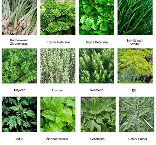 Samen - Saatgutsortiment - Set - Mischung - Mix - Kräutergarten 1 - 12 Sorten - ca. 1.000 Samen