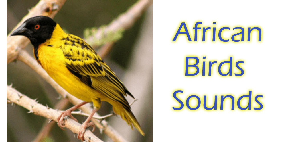 African Birds Sounds Free