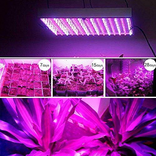 15W LED Pflanzenlicht ROT:BLAU=11:4 Pflanzenleuchte Pflanzen Lampe mit 255 LED Wachstumslampe Grow Wuchs