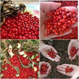 #9: 200 Pcs Red Lucky Seeds RED SANDALWOOD Adenanthera Pavonina - മഞ്ചാടി-Acacia Coral seeds