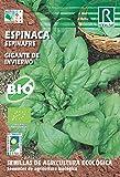 Semillas ECOLOGICAS Espinaca Gigante de Invierno 8 Gr.