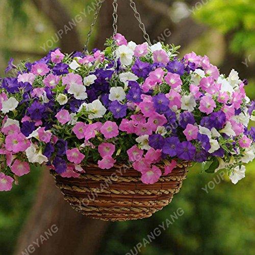 200 pcs / sac Petunia Graines Bonsaï Graines de fleurs Court Taille Jardin Fleurs Graines d'intérieur ou extérieur Plante en pot Livraison gratuite Blanc