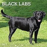 Black Labrador Retrievers - Schwarze Labradore 2019 - 18-Monatskalender mit freier DogDays-App (Wall-Kalender)
