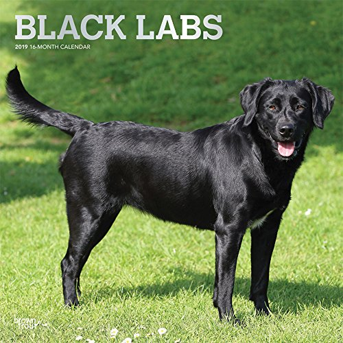 Black Labrador Retrievers - Schwarze Labradore 2019 - 18-Monatskalender mit freier DogDays-App: Original BrownTrout-Kalender [Mehrsprachig] [Kalender] por Inc Browntrout Publishers