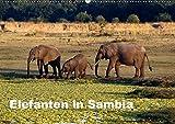 Elefanten in Sambia (Wandkalender 2019 DIN A2 quer): Die Elefanten im South Luangwa National Park können aus nächster Nähe beobachtet und fotografiert ... (Monatskalender, 14 Seiten ) (CALVENDO Tiere) - Johanna Krause