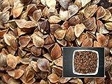 Sarrasin - 15 grammes - Fagopyrum Esculentum - Buckwheat - ( Engrais Vert - Green Manure ) - SEM02
