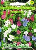 Wegerichblättriger Natternkopf, einjährig, Bienenweide, lange blühend, 'Echium plantagineum'