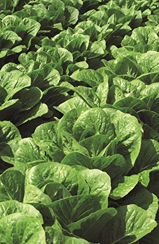 vegetable-kings-seeds-picture-packet-lettuce-claremont