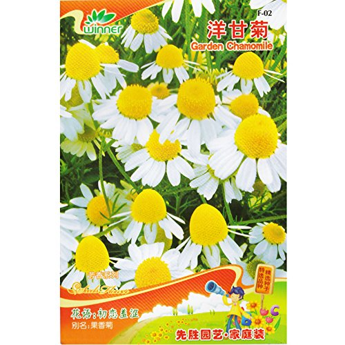 Jardin Camomille semences * 1 paquet de 100 graines * Matricaria recutita * parfumée Mayweed * Camomille