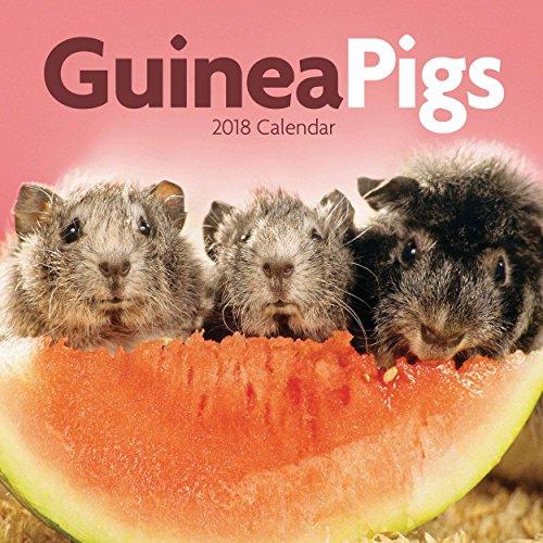 Guinea Pigs 2018 M (Mini Square)