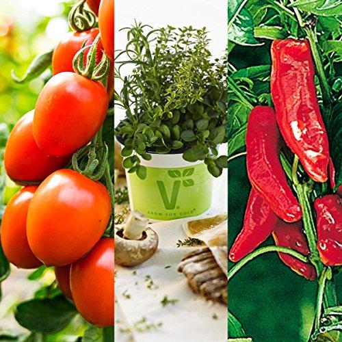 gartenbau-friedrich-pflanzen-set-bella-italia-italienischer-gemuse-krauter-mix-3-pflanzen-fur-den-he