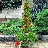 Aimado Seeds Garden-50 Pcs Fraisiers grimpants et remontants Mont Everest graines bio Fruitiers sucrés, savoureux Fraisiers graines pour jardin