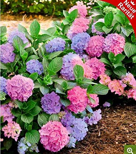 Blumenzwiebeln FLORA GUARD