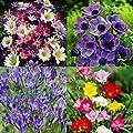Confetti flower Garten - 150 blumenzwiebeln von Meingartenshop auf Du und dein Garten