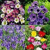 Jardin de Conféttis - 150 bulbes de fleurs