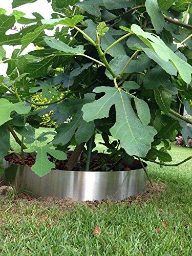 Beetumrandung / Pflanzenring Edelstahl PR800