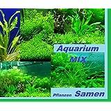 30x Acuario Plantas Semillas Mix Ligero Siembra Nuevo 2016 Nueva Variedad Semillas Rareza Planta Rareza raro #206
