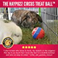 HAYPIGS Circus themed TREAT BALL - 3-in-1 Enrichment Toy - Rabbit Toys - Hamster Toys - Guinea Pig Toys - Small Animal Boredom Breaker from HAYPIGS