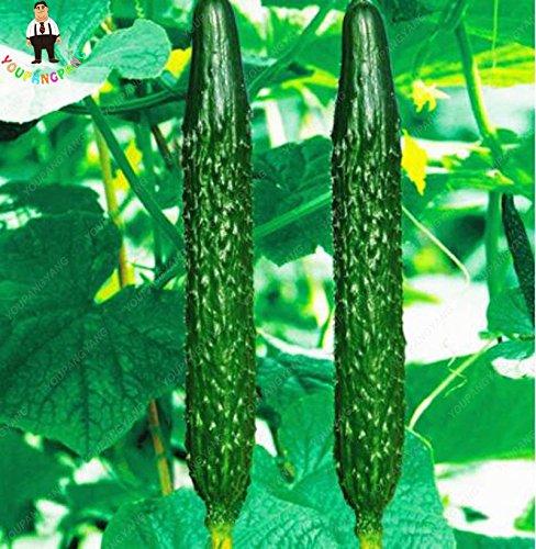 100pcs long fruits Concombre vert Semences potagères Graines Plantes Fleurs comestibles Juicy Fruit Bonsai graines Livraison gratuite