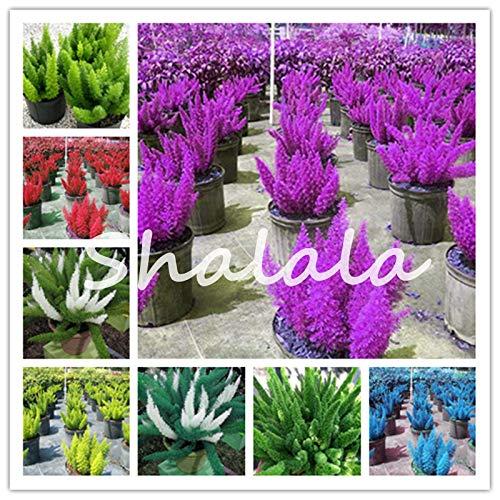 soniry 200 pc piante rare arcobaleno coda di volpe fern bonsai bambu inverno bonsai freschi piante ornamentali per la casa e pianta in vaso: misti