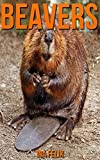 Beavers: Children Book of Fun Facts & Amazing Photos on Animals in Nature - A Wonderful Beavers Book for Kids aged 3-7