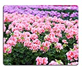 MSD Mousepad IMAGE 19723617 Greenhouse with colorful blooming geranium flowers