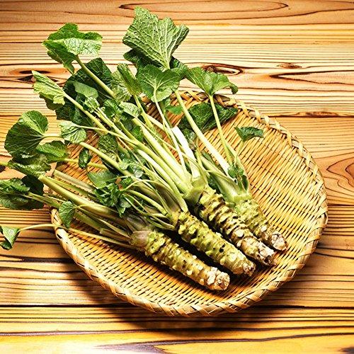 100 pcs graines de raifort japonais Wasabi semences vegetablesfor plante maison de jardin