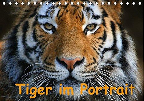 Tiger im Portrait (Tischkalender immerwährend DIN A5 quer): Portrait's von der größten Katze - dem Tiger. (Tischkalender, 14 Seiten) (CALVENDO Tiere) [Kalender] [Sep 28, 2013] Krone, Elke
