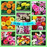 #9: Gate Garden Collection of Sow 10 Flower Seeds Varieties - Calendula, Dahlia, Hollyhock, Ice Flower, Marigold, Poppy, Candytuft, Clarkia, Sweet Pea Heirloom Seeds Exciting Garden