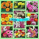 #10: Gate Garden Collection of Sow 10 Flower Seeds Varieties - Calendula, Dahlia, Hollyhock, Ice Flower, Marigold, Poppy, Candytuft, Clarkia, Sweet Pea Heirloom Seeds Exciting Garden