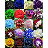 M-Tech Gardens Mixed Rare Color Rose Flower Seeds - Pack of 20 Seeds