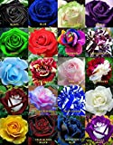 #9: Floral Treasure Mixed Rare Color Rose Flower Seeds - Pack of 20 Seeds
