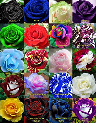 Floral Treasure Mixed Rare Color Rose Flower Seeds - Pack of 20...