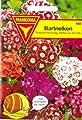 Bartnelke, Nelken, Dianthus barbatus, ca. 400 Samen von Philipp Klein GmbH auf Du und dein Garten