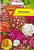 Bartnelke, Nelken, Dianthus barbatus, ca. 400 Samen