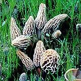 Morel Habitat Kit Backyard Morel Mushroom Growing Kit