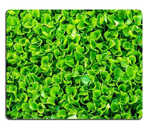luxlady Naturkautschuk Mousepads Bild-ID 31661453Menge Wasserhyazinthe, in einem Teich Hintergrund Muster