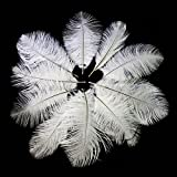 Imported 10pcs Ostrich Feather Crafts fo...