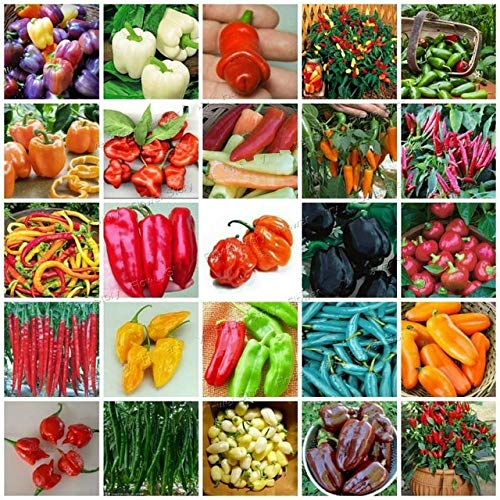 Shopmeeko SEEDS: 2000pcs / bag extrem heiß! Chili-Schote Gemüse Organische süße Paprika Chili Bonsais Bonsai Pflanze Hausgarten: Mix